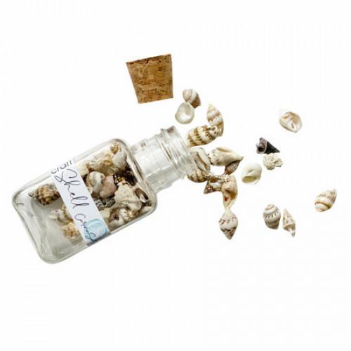 Craft Shell - Conchinhas - Coleção Relax